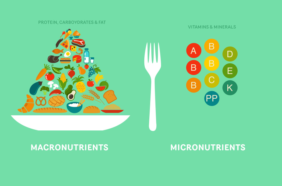 Image result for macronutrients vs micronutrients